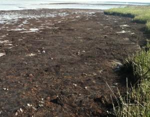 A mudflat in Charleston, SC