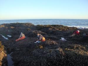 Fellow PISCO field techs working experimental plots along the Oregon coast